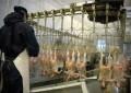 کشتارگاه مرغ