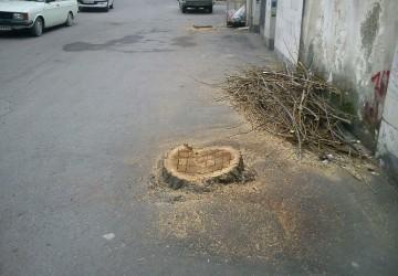 درخت بریده
