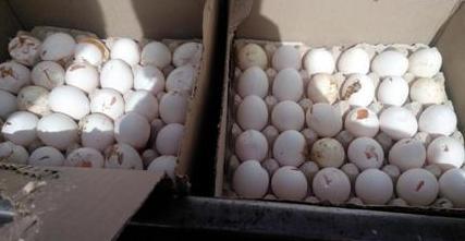 کشف یک محموله تخم مرغ فاسد در آستارا